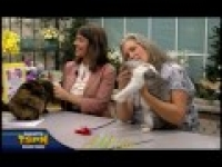 Kitti Ruttan of the Wine Country Cat Club is on AMLive today TSPN TV 3 11 15